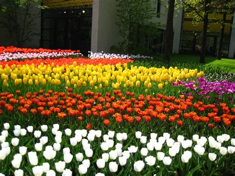 garden tulips flower jpg hi holland tulip gardens hd wallpapers hd nature wallpapers