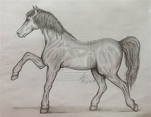 Pencil Drawing - Horse II by Pluckinthaguitarra on DeviantArt