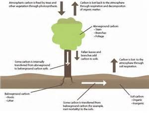 forestech biochar carbon sequestration