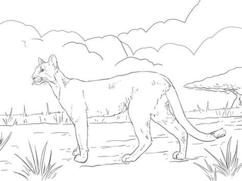 florida panther coloring page supercoloringcom
