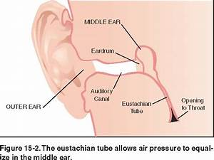 What Is A Eustachain Tube