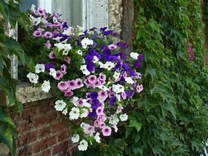 Jardiniere Fleurie Plein Soleil : jardiniere fleurs ~ Melissatoandfro.com Idées de Décoration