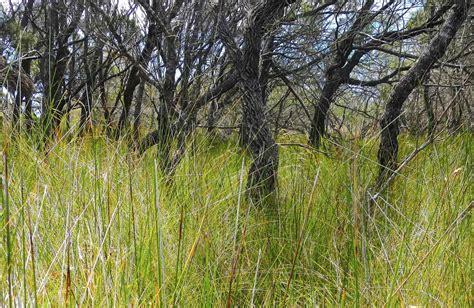 grass tree australian native plants nsw national parks