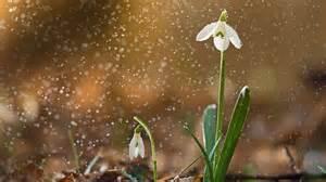 Sneeze Spring Bing Wallpaper Download