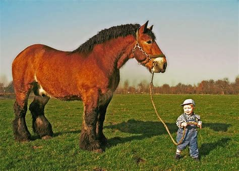 Small Kid Plays with Huge Horse - YouTube