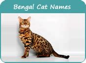 Bengal Cat Names, Cat Names Of Bengal Breed, Page 1