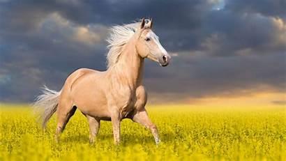 Horse Animal Wallpapers Animals Walls