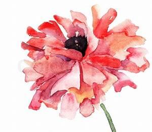 Stylized Poppy flower illustration Stock Photo Colourbox