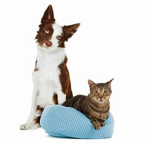 elevated dog beds cots raised beds for dogs petsmart dog With petsmart extra large dog beds