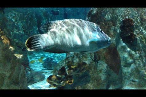 picture of aquarium sea val d europe marne la vallee tripadvisor