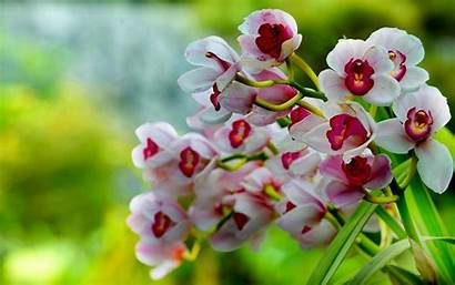 Orchid Orchids Wallpapers Shenzhen Pink Background Backgrounds