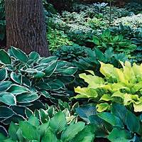 plants for deep shade Deep+Shade+Plants+Zone+5 | ... of shade shrubs zone 5 http ...