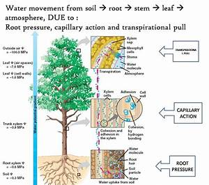 Biology  U0026 Science Tuition  Chapter 1  Transport In Plant