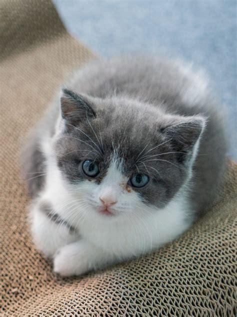 gambar kucing lucu imut keren cantik galau