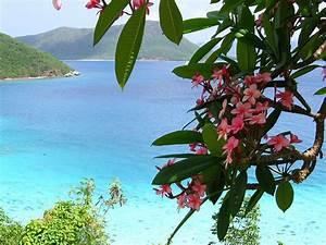 Plumerias in Paradise   Flickr - Photo Sharing!