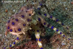 1, Octopus, U0026, 39, S, Garden