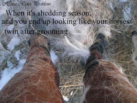 with horses 12 problems only equestrians will understand - Shedding Season