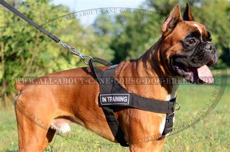 Lightweight Sport Nylon Dog Harness