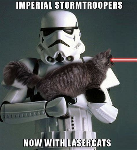 17 Best Images About Star Wars Cats On Pinterest Darth