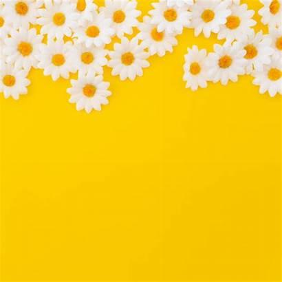 Yellow Pretty Background Daisies Bottom Flower Copyspace
