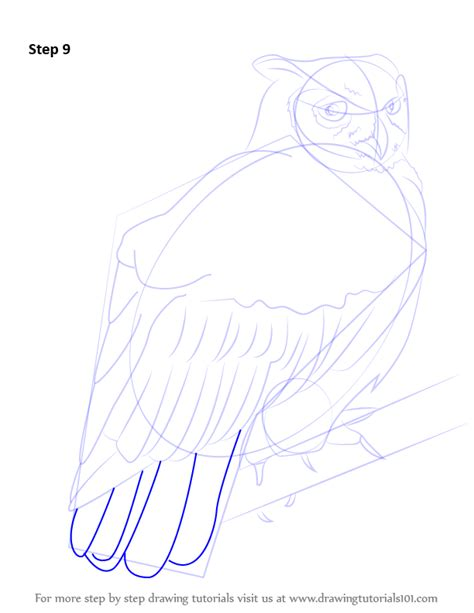 learn   draw  great horned owl owls step  step