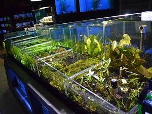 Meilleur Site De Vente De Plantes En Ligne : plantes aquatiques d 39 aquarium animaux guide d 39 achat fut ~ Melissatoandfro.com Idées de Décoration