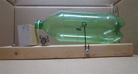 homemade mouse trap simple humane rat trap