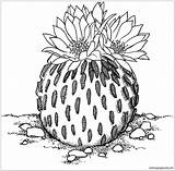Cactus Pages Coloring Pelecyphora Coloringpagesonly Flower Drawing Printable Colouring Mexican Illustration sketch template