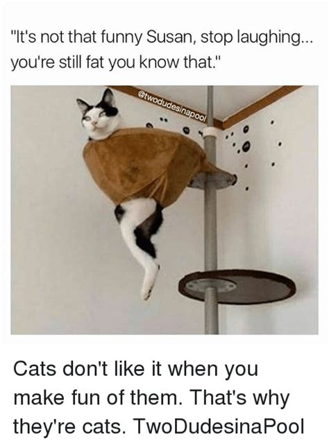 Susan Meme - it s not that funny susan stop laughing you re still fat you know that es oo cats don t like it