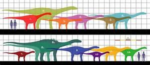 Sonidosaurus  U2014 Wikip U00e9dia