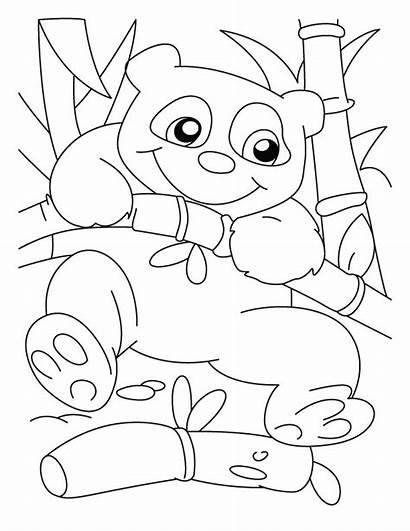Panda Coloring Pages Bear Printable Climber Sheets