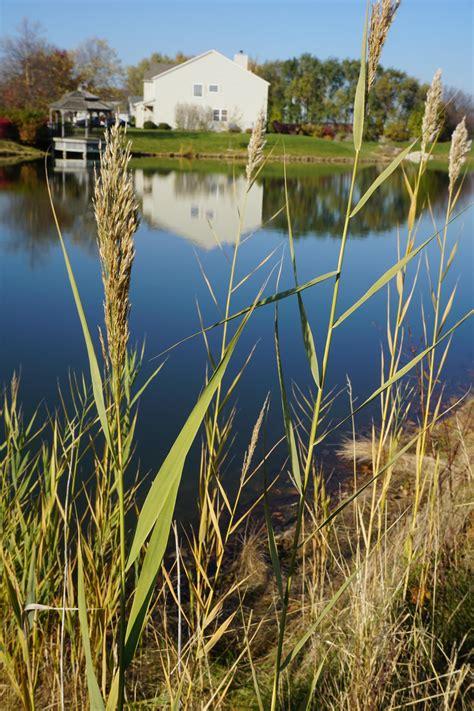 illinois zone grass november species comments