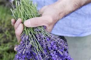 Lavendel Schneiden Im Herbst : lavendel richtig schneiden ~ Lizthompson.info Haus und Dekorationen