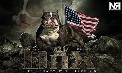 Bully Dax American Gotty Juan Gottiline Dog