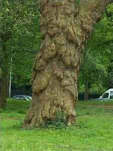 Abattage D Arbres Autorisation : les arbres qui ne cacheront plus la for t ~ Premium-room.com Idées de Décoration