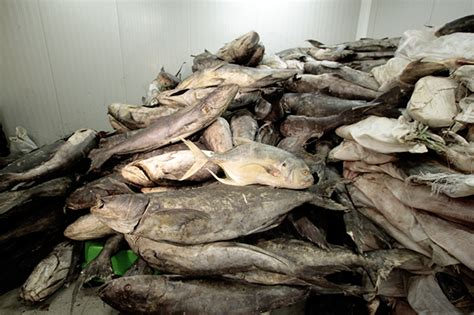 cout d une chambre froide rufisque conservation des produits halieutiques une