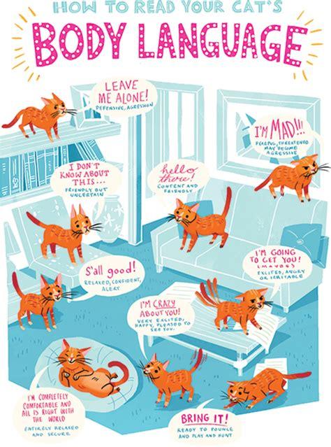 cat whisperer healthy paws pet insurance