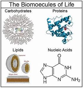 Free Biology Guides