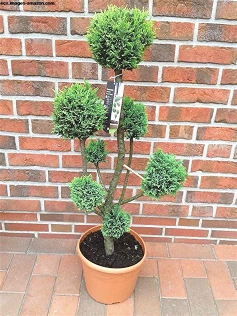 Tipps Für Den Garten by Zierb 228 Ume F 252 R Den Garten