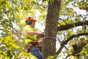 mike s tree service tree trimming