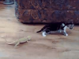 Funny Kitten GIFs - Find & Share on GIPHY