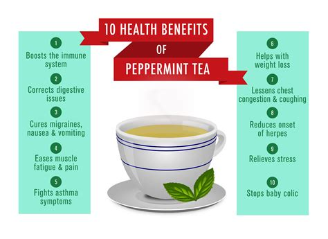 peppermint tea benefits peppermint tea benefits 28 images 1000 ideas about peppermint tea on pinterest peppermint