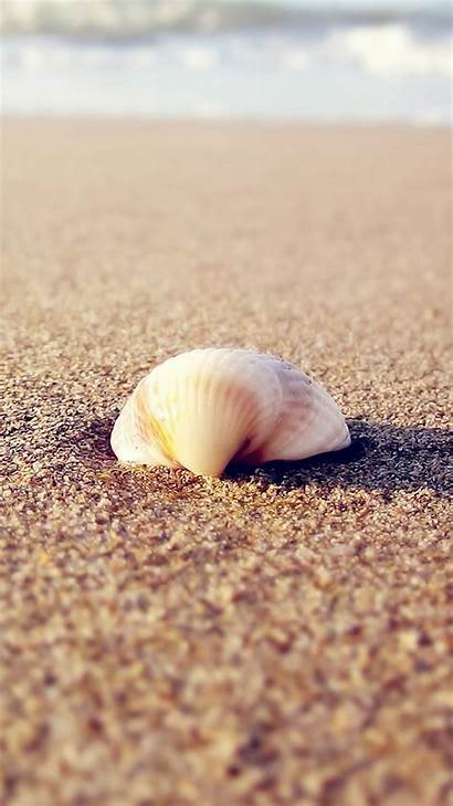 Beach Shells Iphone Android Wallpapers