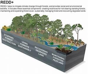 www.batangtoru.org | Batang Toru forest: Carbon Stocks