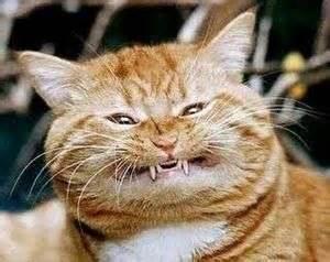 calico cat names calico cat name