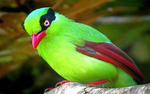 Cute Little Green Bird Computer Hd Wallpapers