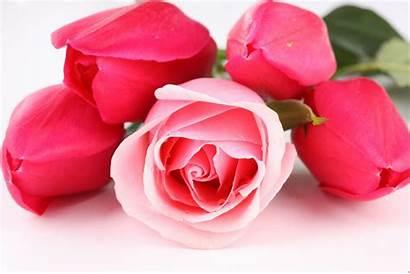 Rose 3d Pink Desktop Roses Wallpapers Pixelstalk