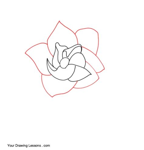 Gardenia Drawing by How To Draw A Gardenia Your Drawing Lessons