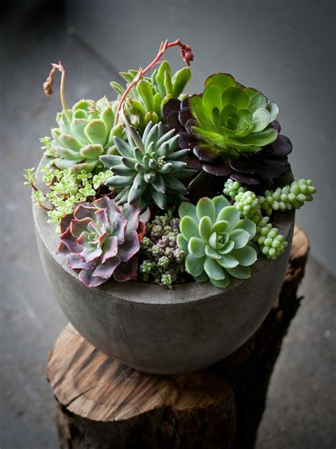 indoor succulents 35 awesome succulents garden ideas home design and interior