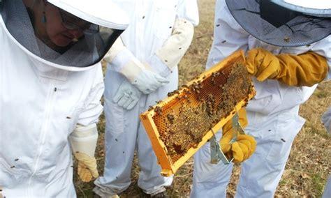 ou trouver une poele a paella o 249 trouver une formation en apiculture